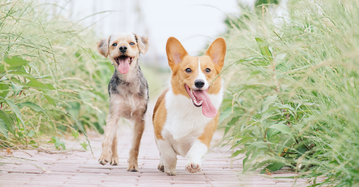 CBD & Pets | Need-to-Knows for Dogs and Cats